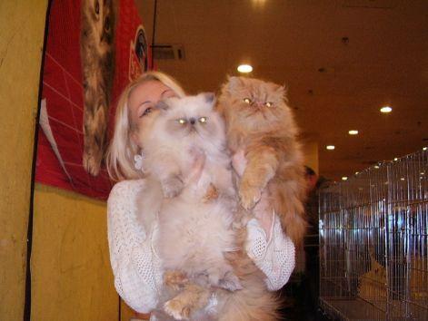 Macska kennel eladó